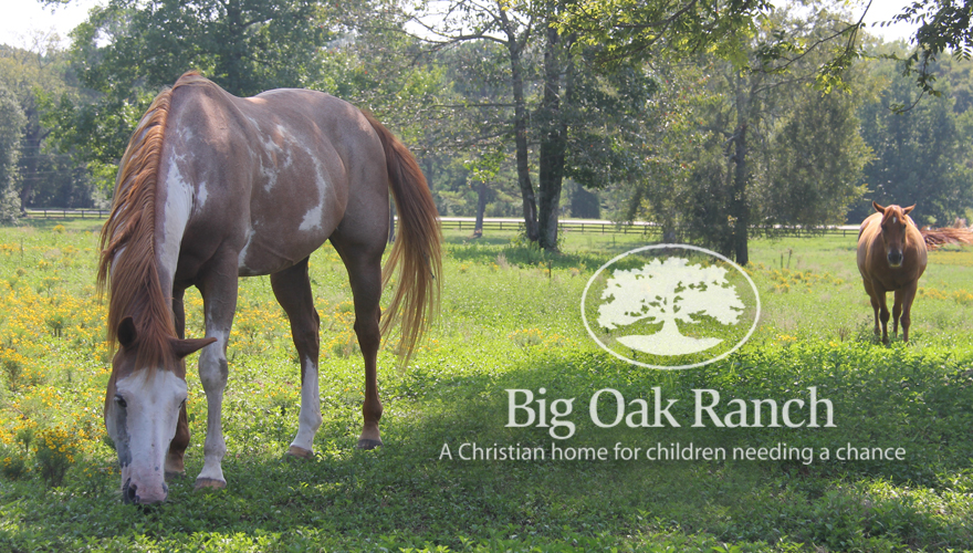 Big Oak Ranch Horse