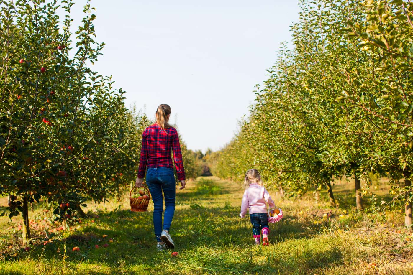 An apple orchard and other fun fall things to do near trussville oksix © 123rf